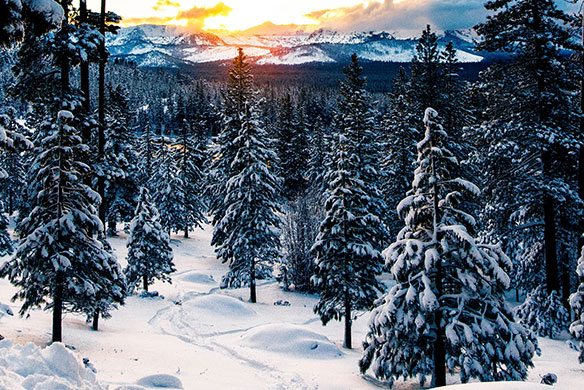thick snow covers forest floor and mountain ridge