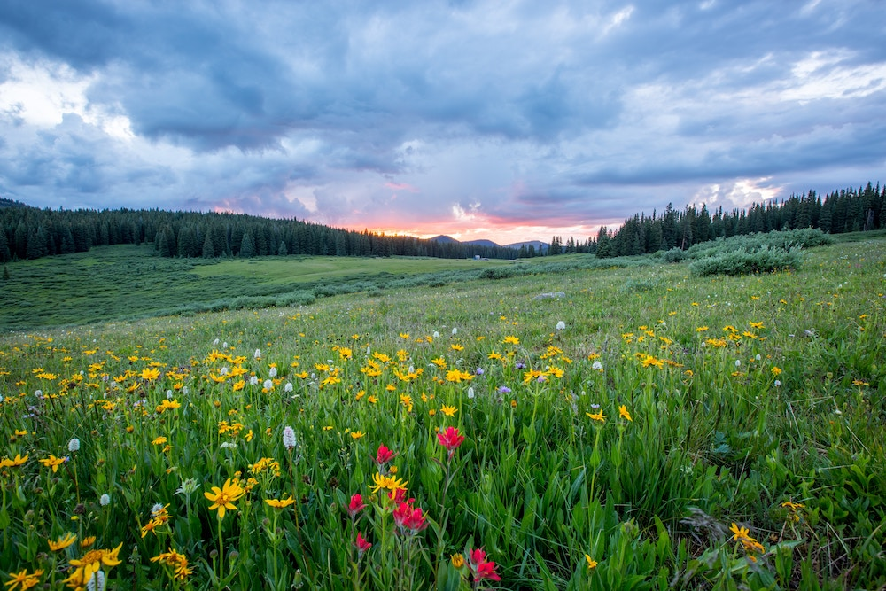 A field of wildflowers beneath a stormy sunset.