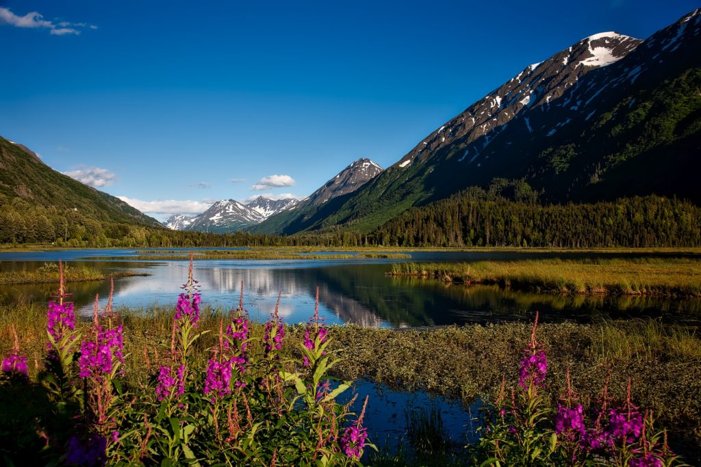 Snow-capped, forest Mountain lake with pink flowers at Chugach State Park, Alaska.